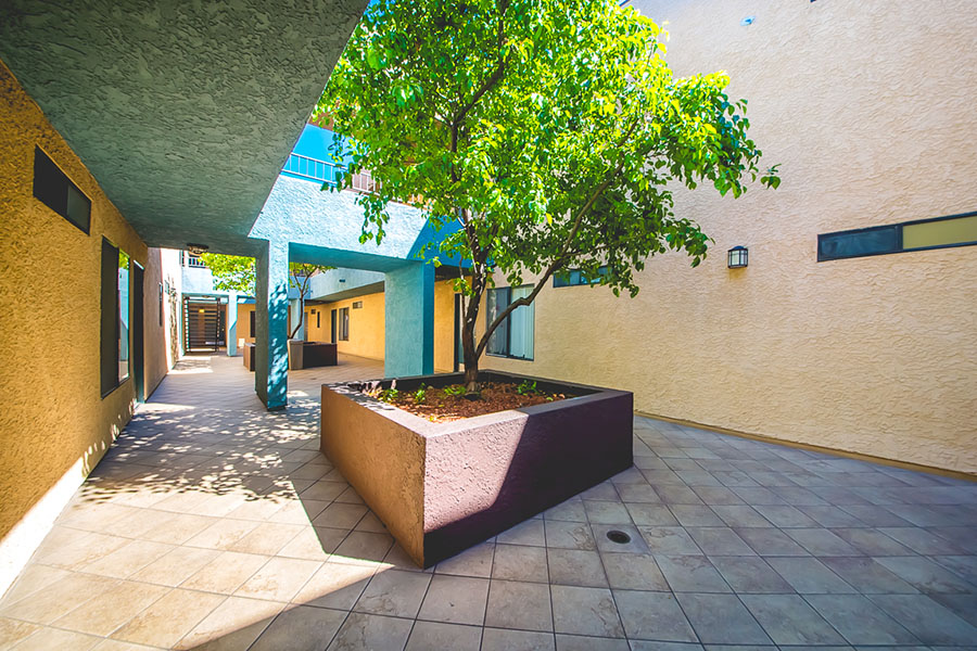 Courtyard with apartment entrances, mezzanine level, and large planter with tall tree.