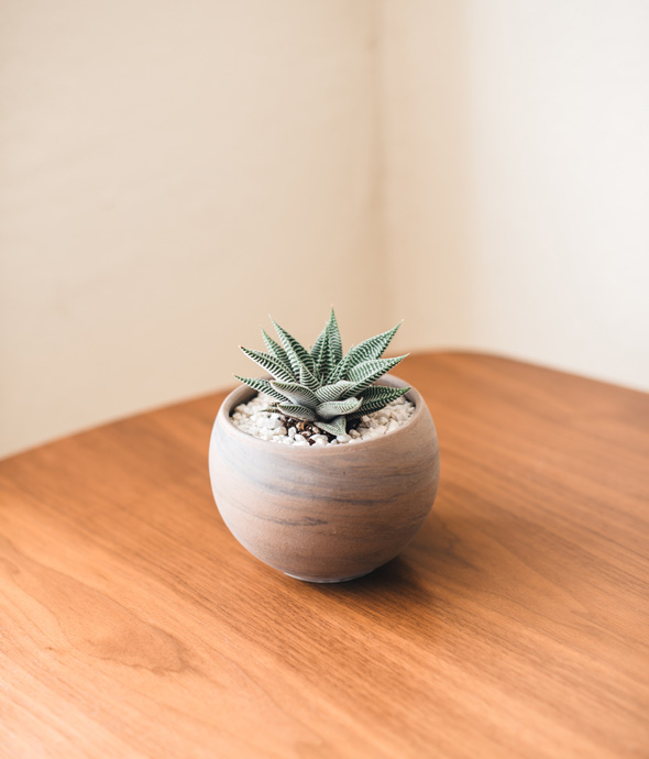 warm lighting of a hard wood table and a tiny clay potted succulent