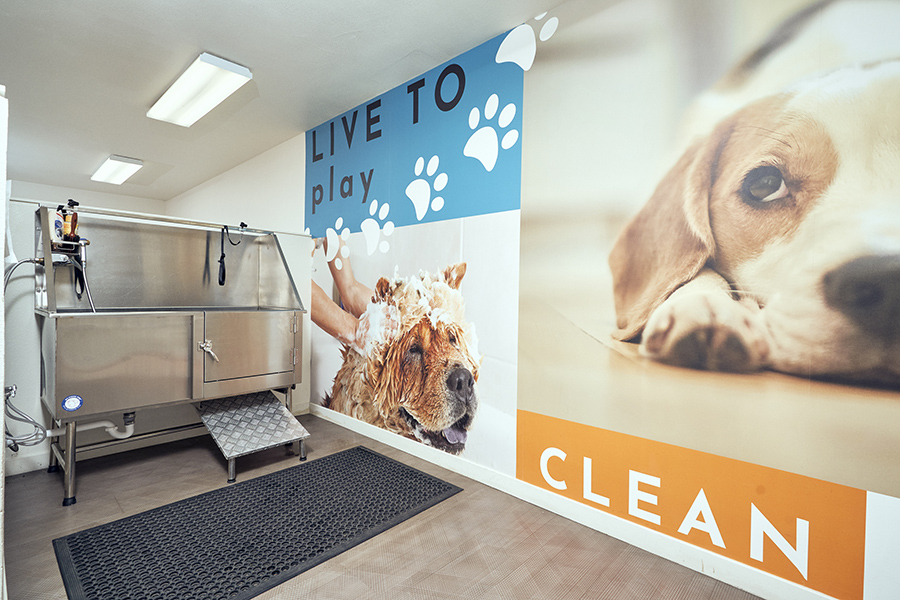 Pet wash room with large metal dog washing station.